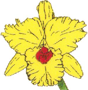 Logo der Apotheke Auf der Horst