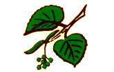 Logo der Vierlinden-Apotheke