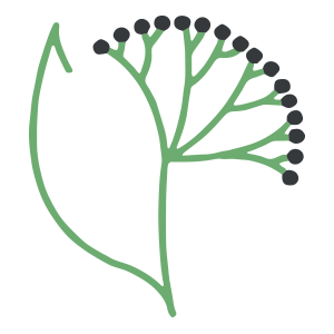 Logo der Holunder-Apotheke