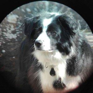 Porträtfoto von Juno