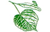 Logo der Linden-Apotheke Lichterfelde